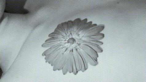snuff flower