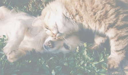 Cat and Dog_edited_edited.jpg