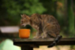 cat-4412839_1920.jpg