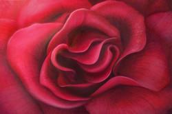 Unfurling Rose