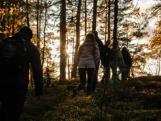 Helsingin kaupunki kehittää työntekijöiden hyvinvointia uuden metsäkylpyohjelman avulla