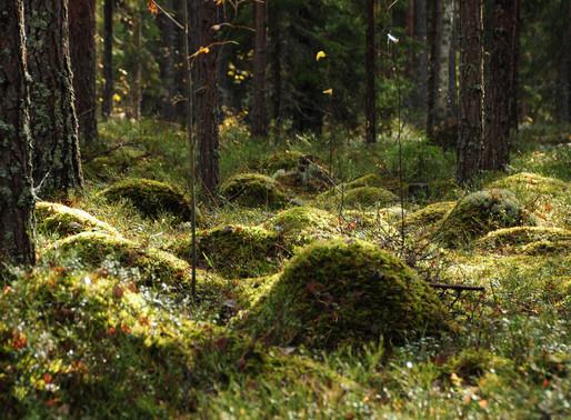 5 vinkkiä hyvinvoinnin edistämiseksi luonnon avulla / 5 tips to improve wellbeing through nature