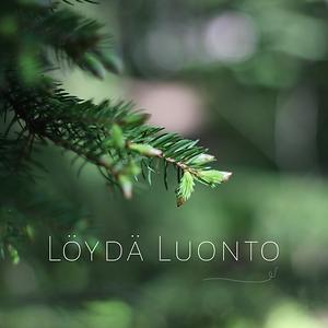 Löydä luonto -metsäkylpyohjelma tukee työhyvinvointia luonnon avulla