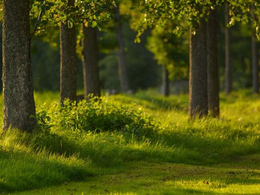 Mitä metsäkylpy on ja miksi sinun tulisi kokeilla sitä?