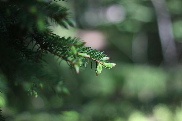 Löydä luonto -metsäkylpyohjelma tukee työhyvinvointia ja työntekijöiden kokonaisvaltaista