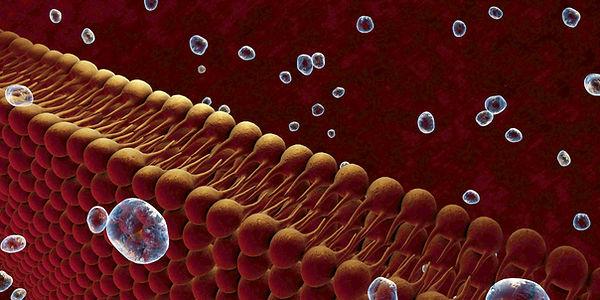 Cellmembrane artist drawing.jpg
