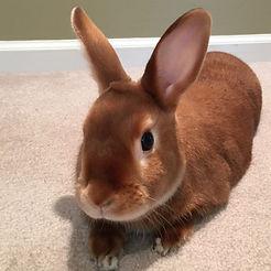 Bunny_edited.jpg