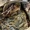 Thumbnail: Bignè  gobelin ruscello