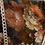 Thumbnail: Glicinetta fiori multicolor