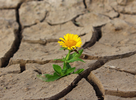 How to be positive about trauma
