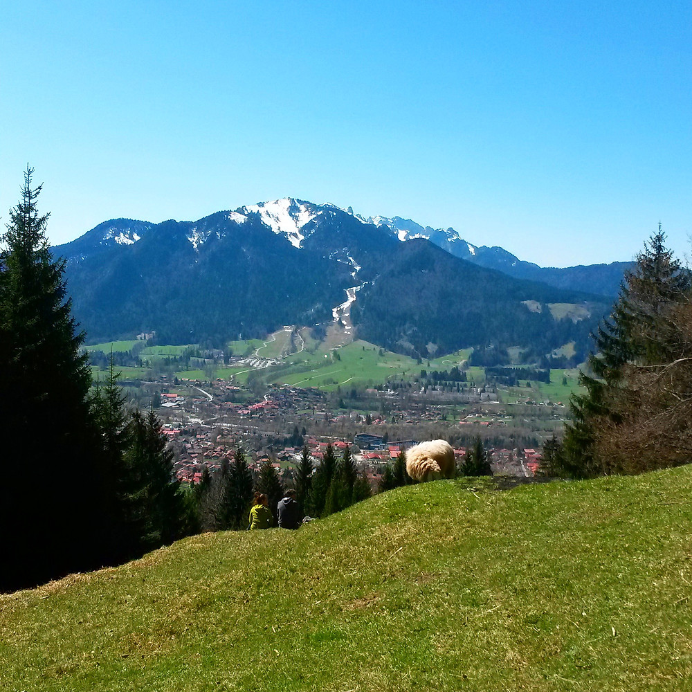 hikers and sheep on a mountain in Lenggries, Bavaria