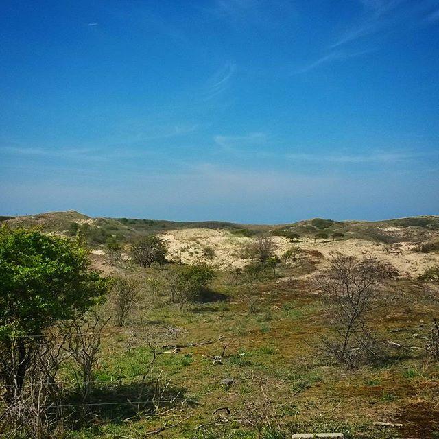 meijendel sand dunes, The Hague