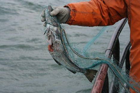 Grey seal damage - Vaida Surviliene