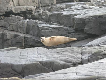 Apie ruonius ir žvejus Baltijos jūroje