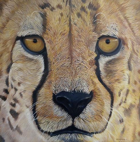"""Cheetah (56x56""""), 2017"""