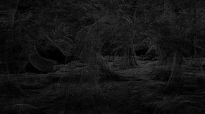 Forest Point Cloud.jpg