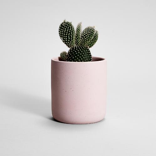 FIORIERA rožinis vazonas