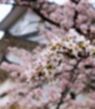 japan-1220517_1920.jpg
