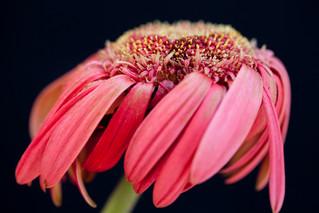 32.Faleena Hopkins Photography Felle.jpg