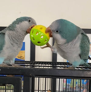 quakers with toy.jpg
