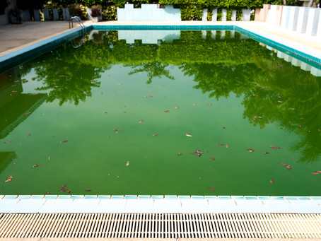 Green Pool Makeover