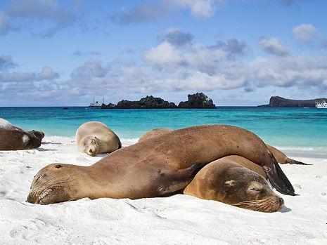 Galapagos en hotel