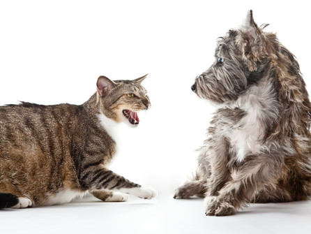 How To Stop Your Cat Attacking Your Dog