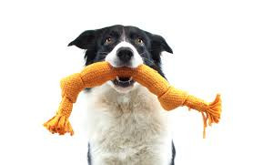 DIY Interactive Dog Toys For Canine Enrichment
