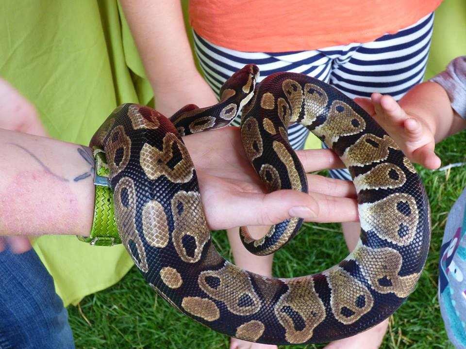 Our snakes are always popular!