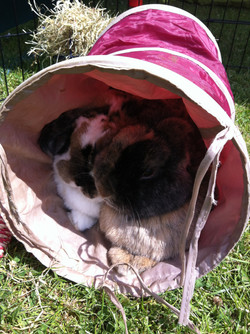 """Say """"Hi!"""" to our snuggly bunnies!"""