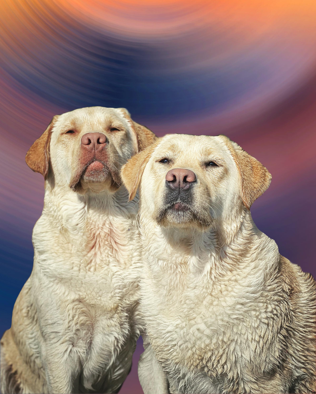 Restorative Pet Care 8-week Course