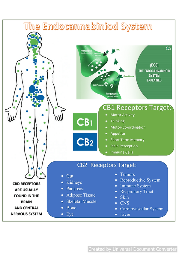 endocannabanoid system 2.png