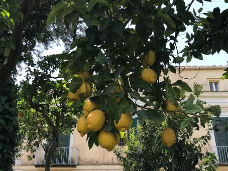 Il limone di Sorrento