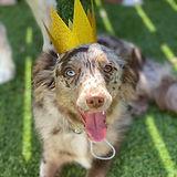Rylee with crown.jpg