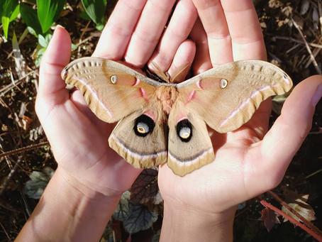 Mother of Moths?