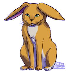 cat-bunny-1