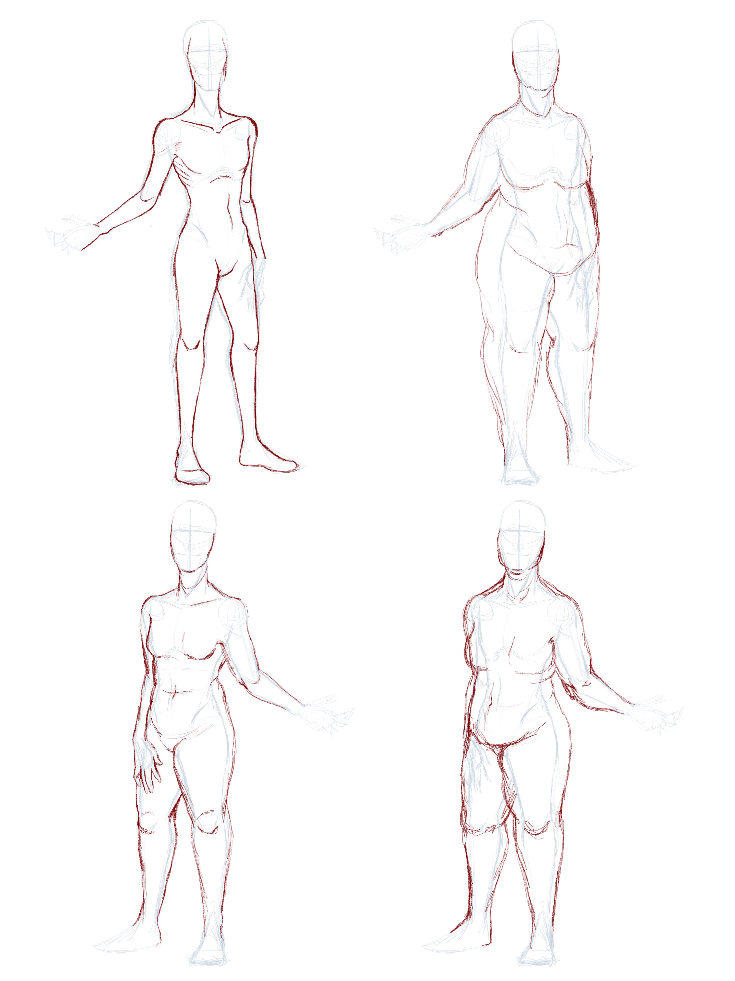 Bodies fat