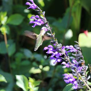 Hummingbird in Fall.jpg