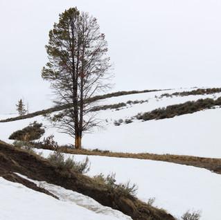Yellowstone Solitude.jpg