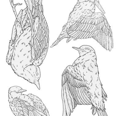 Dead birds linework