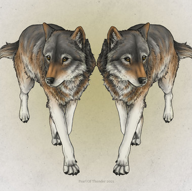 Grey Wolf - Fineliner and digital colour