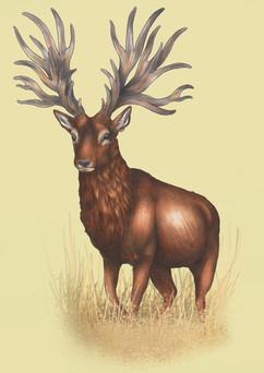 Extinct Bush Antlered Deer