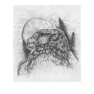 Bird pencil study