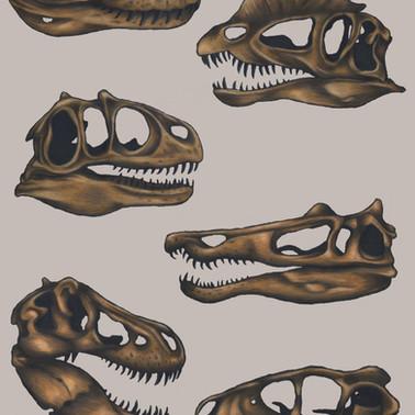 Dinosaur Skulls - Coloured pencil