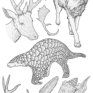 Animals and natural objects linework