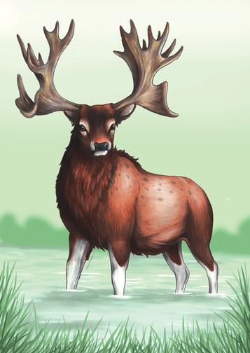 Extinct Stag Moose