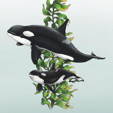 orca and baby .jpg