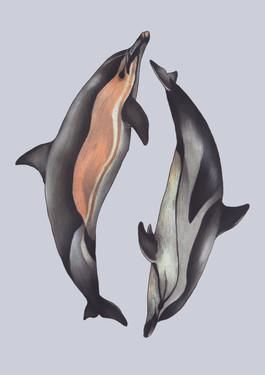 British Isles Dolphins