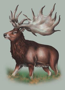 The Extinct Irish Elk