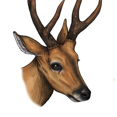 Marsh Deer - Fineliner and digital coloured